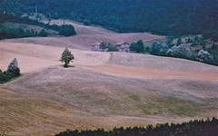Landscape - Olympus OM1 (sladkij11) Tags: landscape olympus fields zuiko om1 paesaggio campi