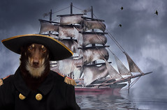 Anchors Away (aussiegall) Tags: rescue dog ally ship captain sailor kelpie