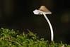Champignon_0029 (Yves.Henchoz) Tags: macro mushroom vent chapeau tordu danseuse