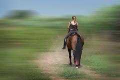 Horse (juanjofotos) Tags: naturaleza caballo explore adamski burriana nikond800 nikon105mmf28micro juanjofotos clotdeburriana juanjosales