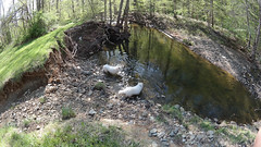 """Chase & jag In A Swimming Hole • <a style=""""font-size:0.8em;"""" href=""""http://www.flickr.com/photos/96196263@N07/14138680996/"""" target=""""_blank"""">View on Flickr</a>"""