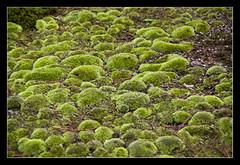 near Bamboo forest @Kyoto, Japan (brunombo) Tags: travel verde green japan kyoto pentax tamron viaggio giappone tamronaf18250mmf3563diiildasphericalifmacro justpentax
