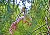 Zoo de Barcelona (8).- (ancama_99(toni)) Tags: barcelona vacation españa fauna zoo spain nikon aves catalonia ave catalunya vacaciones hdr barcellona cataluña barcelone 1000views 18105 2014 catalogne 10favs 10faves 25favs 25faves d7000
