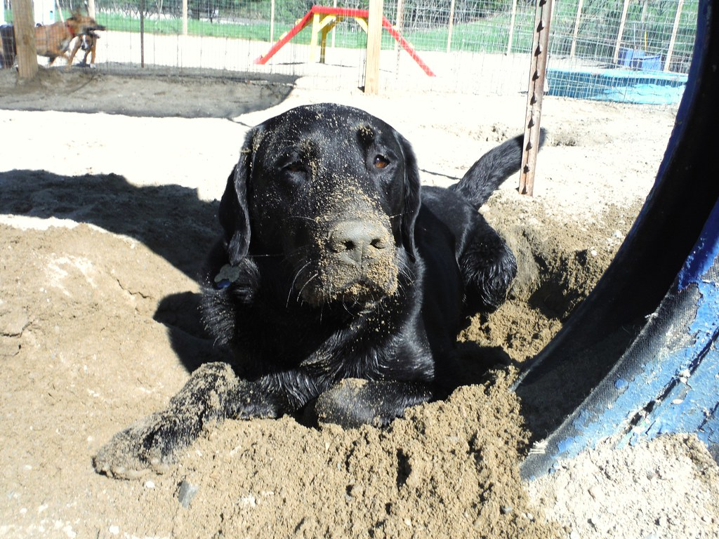 Guilliver's Doggie Daycare photostream
