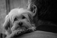 Hombro con perro [Explore] (BuRegreg) Tags: street spain streetphotography explore streetphoto rua rue mercadomedieval albacete 2014 castillalamancha