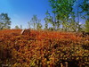The world of moss. (Yolanta Z) Tags: stagathe