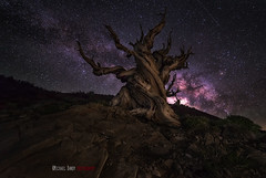 Ancient Places (Michael Bandy) Tags: california trees light lightpainting tree pine night painting stars landscape nikon nightscape space whitemountains flashlight nightsky bristlecone darksky milkyway bristleconepine d600 bristlecones ancientbristleconepineforest rokinon