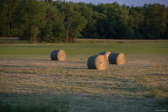 Evening in the Country (Jason Lowe Photography) Tags: light field golden countryside scenery quiet country farming harvest scenic meditation hay goldenhour goldenlight rotoballe pleasanrt