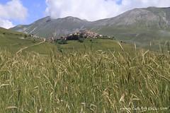 Castelluccio di Norcia (Claudia Celli Simi) Tags: italia umbria grano spighe fioritura castellucciodinorcia parconaturaledeisibillini