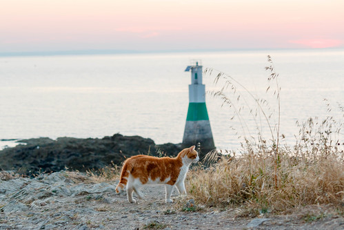 Chat et phare