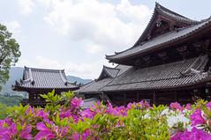 (GenJapan1986) Tags: 2011      japan nara temple flower  spring nikond90
