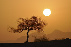 A Carefree Morning (The Spirit of the World) Tags: light sun sunlight india mountains sunrise landscape rocks pali rajasthan autofocus wildlifereserve rememberthatmomentlevel4 rememberthatmomentlevel1 rememberthatmomentlevel2 rememberthatmomentlevel3 rememberthatmomentlevel7 rememberthatmomentlevel9 rememberthatmomentlevel5 rememberthatmomentlevel6 rememberthatmomentlevel8 rememberthatmomentlevel10