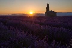 Lavanda... (Paolo Cirmia) Tags: flowers landscapes lavender fiori francia paesaggi lavanda valensole