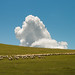 Cloud and Sheep
