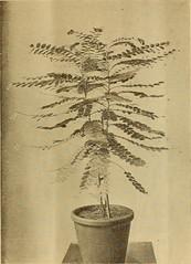Anglų lietuvių žodynas. Žodis little-leaf fig reiškia mažai lapų pav lietuviškai.
