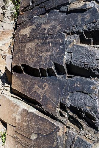 animal petroglyphs (Tamgaly - Kazakhstan) 5