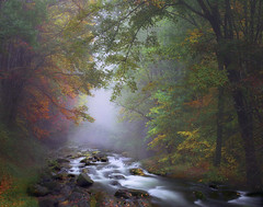 Nature of my dreams (Sapna Reddy Photography) Tags: blueridgeparkway greatsmokymountainsnationalpark nationalpark colors trees foliage fall autumn river fog most flow water stream