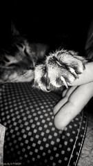 The tiger... (PY6RDM) Tags: motog4plus black white preto branco appvignette app vignette bw photo foto fotografia woman mulher cat gato