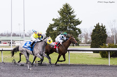 Fight For It (Casey Laughter) Tags: racehorse turfway thoroughbred horse horseracing horses winner loser fun racing racetrack race track saddlecloth tack gate taa