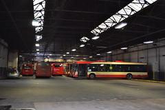 Halton Transport 29 DG02WXV - 89 MIG8173 - 91 MIG8175 - 81 MIG8164 (Will Swain) Tags: widnes 12th march 2017 halton borough transport bus buses travel uk britain vehicle vehicles county country england english north west town 29 dg02wxv 89 mig8173 91 mig8175 81 mig8164