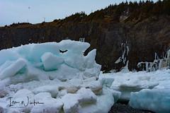 Middle Cove Ice-17-6 (Ian L Winter) Tags: nature newfoundland driftice ice middlecove logybaymiddlecoveoutercove newfoundlandandlabrador canada ca