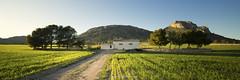 Sembrao (J Dominguez) Tags: paisaje verde siembra