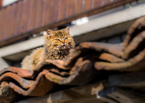 Orange-Brown Cat Sunbathing