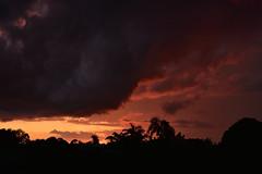 Sunset palms (Dreaming of the Sea) Tags: nikon d7200 dusk tamronsp2470mmf28divcusd tamron2470mm clouds twilight trees sky sunset palmtrees goldenhour redsunset storm sun 1000v40f