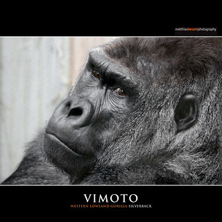 VIMOTO