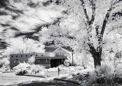 Bosque del Apache (inlightful) Tags: bosque infrared nir nearinfrared ir wildliferefuge bosquedelapache socorrocounty newmexico nature outdoors