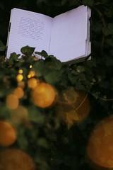 8979 (justlovepictures) Tags: lighst book girl feelings bokeh green