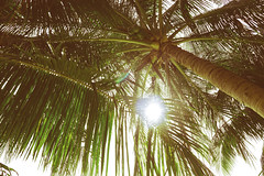 Coconut tree (_Ry.N) Tags: vietnam coconut tree green island love live travel vacation family photography