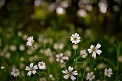 fleurs en sous bois (karine_cattier) Tags: smileonsaturday seasonsbeauty 7daysofshooting lowvantagepoint colorfulthursday cmwd s nice see