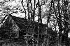 alte Scheune (jueheu) Tags: altescheune scheune schuppen bäume baum trees tree schwarz weis schwarzweis sw bw engden grafschaftbentheim niedersachsen deutschland germany hütte