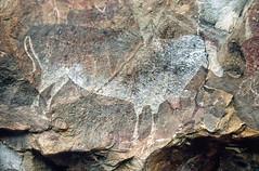199? san rock painting eland 014-Edit (francois f swanepoel) Tags: 1998 boesmantekeninge bushman bushmenpaintings drakensberg eland joe ndedemagorge rockart rotskuns sanrockart sanrockpaintings southafrica
