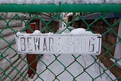 big sign, tiny dog (KevinIrvineChi) Tags: beware dog sign green fence chainlink chainlinkfence chicago chicagoist chilly chiberia gangway ravenswood snow snowcovered snowy snowstorm snowfall houses neighborhood illinois consumerist sony dscrx100 outdoors outside white red brick