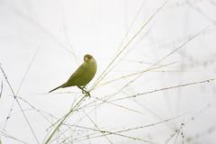 Cony Island Bird (thecrapone) Tags: singapore bird cony island wildlife nature