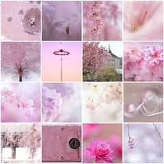 Enjoying Pink (haberlea) Tags: fdsflickrtoys pink mosaic flowers