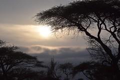 Safari Sunrise (The Spirit of the World) Tags: safari kenya eastafrica africa acaciatrees trees sun sunrise amboselinationalpark landscape foliage morning clouds fog sky nature fogbank