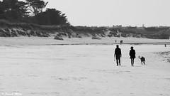 On the beach - Lampaul Ploudalmézeau (patrick_milan) Tags: noiretblanc blackandwhite noir blanc monochrome nb bw black white landscape sea mer iroise water plouguin saint pabu brittany bretagne saintpabu ploudalmezeau porsall finistère saariysqualitypictures sand sable horse dog cheval chien plage beach