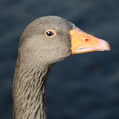 254 (AO'Brien) Tags: arklow wicklow autumn birds