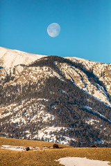 Full moon setting from with bison (YellowstoneNPS) Tags: gardiner jacobwfrank yellowstone bison elk moon mountains portrait pronghorn winter