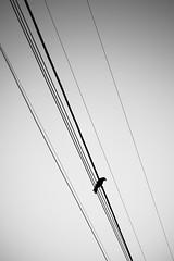 *** (Misha Sokolnikov) Tags: bird wire sky line geometry lines silhouette blackandwhite blackwhitephotos blanconoir blancoynegro noiretblanc monochrome leica leicamonochrom leicamm leicamsystem leicacamera 50mm aposummicron bw ca california sanfrancisco sanfranciscoca sf