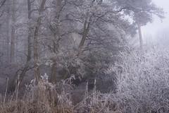 Frets (jellyfire) Tags: forest hoxne landscape landscapephotography sonnartfe55mmf18za sony sonya7r winter atmospheric cold fog frozen hoarfrost leeacaster mist trees woods wwwleeacastercom zeiss