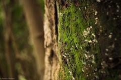 Vida en todos los tamaños (Roberto Caballero Sub) Tags: musgo macro canon7d canon naturaleza bosque chile