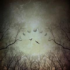 Ostensible (Eduardo Mueses) Tags: ipad iphone snapseed grunged distressed splitpic pdq moon symmetry art birds skies sky trees tree