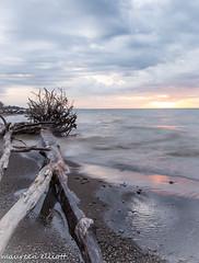 Will it Rain? (maureen.elliott) Tags: treetrunk driftwood beach shoreline sunrise lakeerie greatlakes water waves clouds wheatley outdoors nature