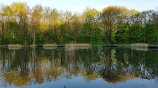 Tibshelf Ponds (Week 42/52)_(In Explore)