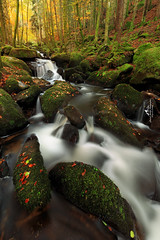 Torrent de couleurs (Laurent BASTIDE Photographies) Tags: auvergne puydedome water blue red yellow flower vallée light sun rock france cantal green automne
