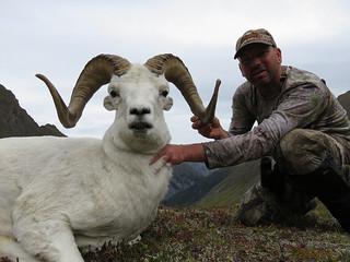 Alaska Dall Sheep Hunt & Moose Hunt 13